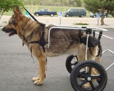 canine wheelchairs